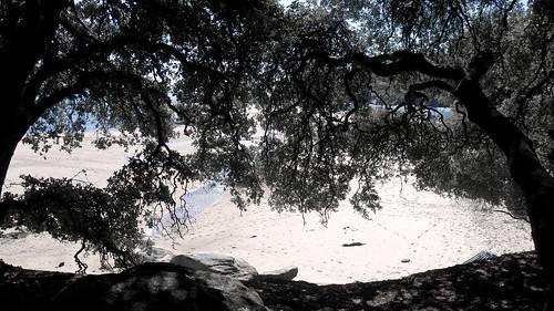 plage de sable fin, forêt de pins et océan.... 3/3 by ime-imisa .....au ralenti....