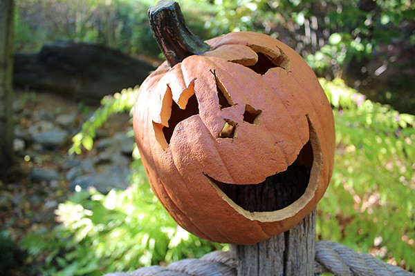 Friendly Carved Pumpkin