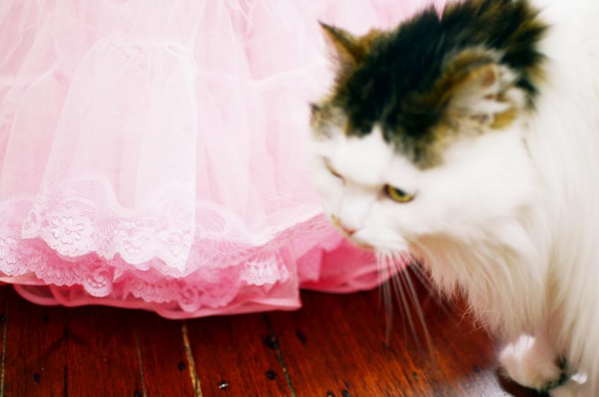 vintage-pink-petticoat d