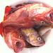 Bucket of Rockfish Capitola Fishing by neas