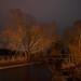 Light Tree's - worked with Led Lenser21R by JanLeonardo - Light Painting Artist
