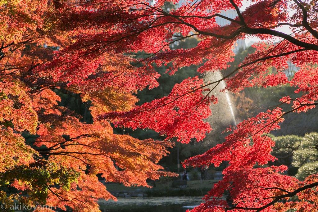 Hibiya park @ TOKYO.