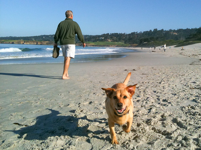 Carmel Beach - Dog Friendly Carmel