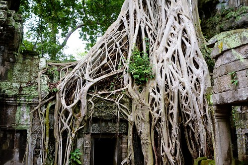 More roots from trees at Ta Prohm, Angkor Wat