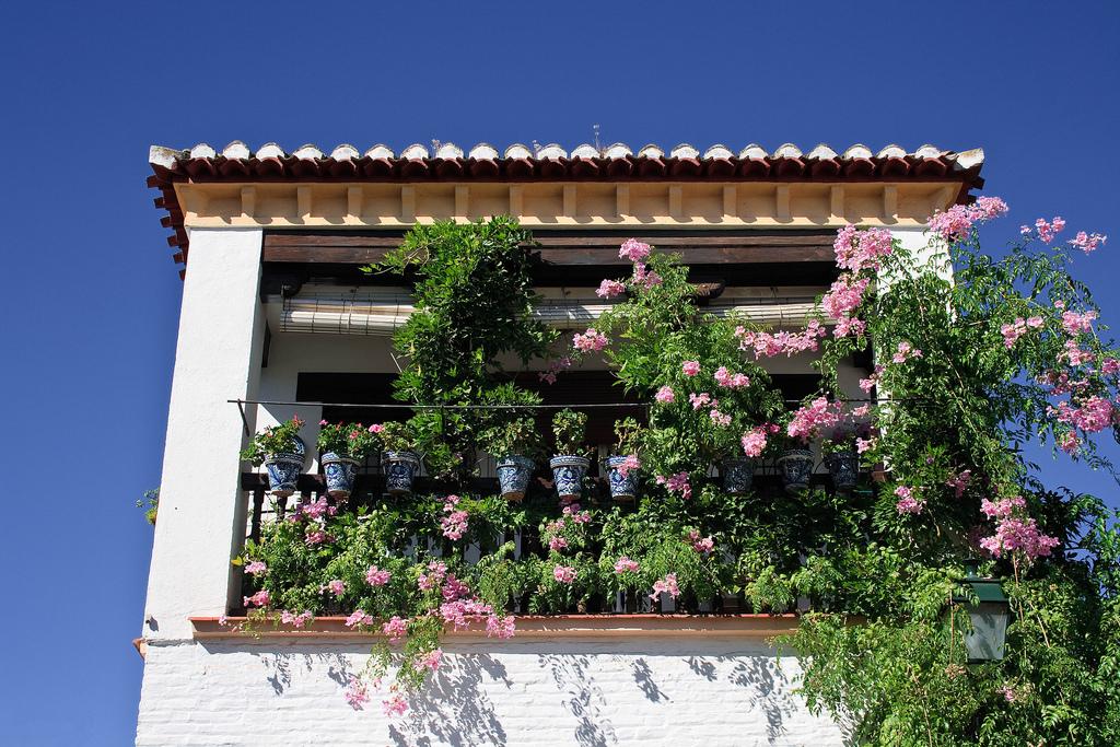 10. Rincón florido del Albaicín. Autor, Mario López