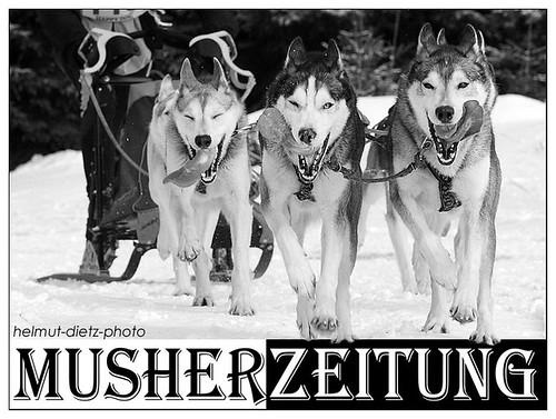 WSA WM Oberwiesenthal: Siberian Husky Weltmeister 2010