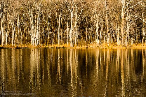 usa lake reflection tree water forest lago us woods flora nikon nashville tennessee unitedstatesofamerica bosque árbol nikkor d4 radnorlake radnorlakestatenaturalarea 70200mmf28gvrii 2012112510977