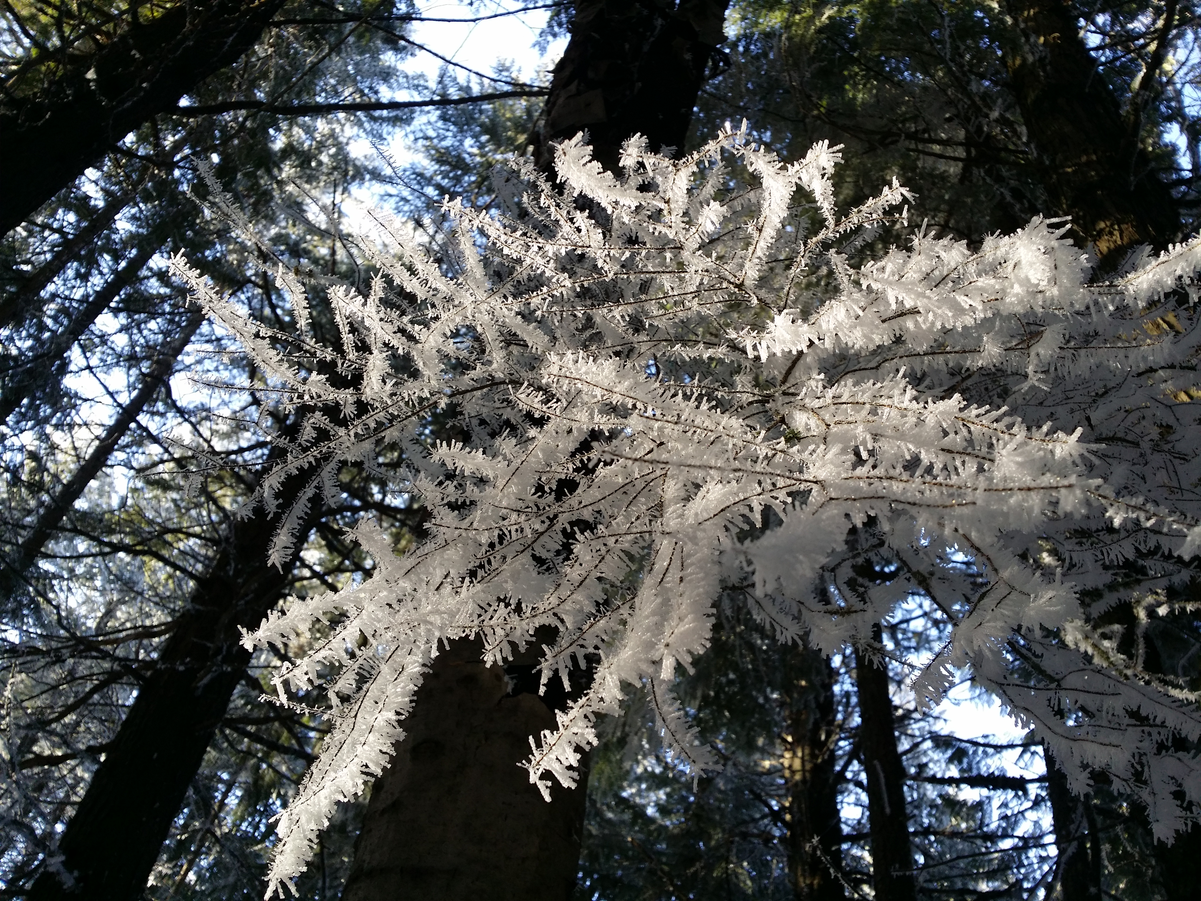 Hoarfrost on today's ride.