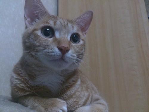 甘ったれで困ったちゃんの保護猫トロワ君