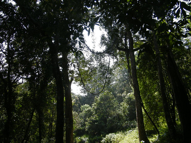 in the mighty jungle, Periyar Tiger Reserve, Thekkady, Kerala