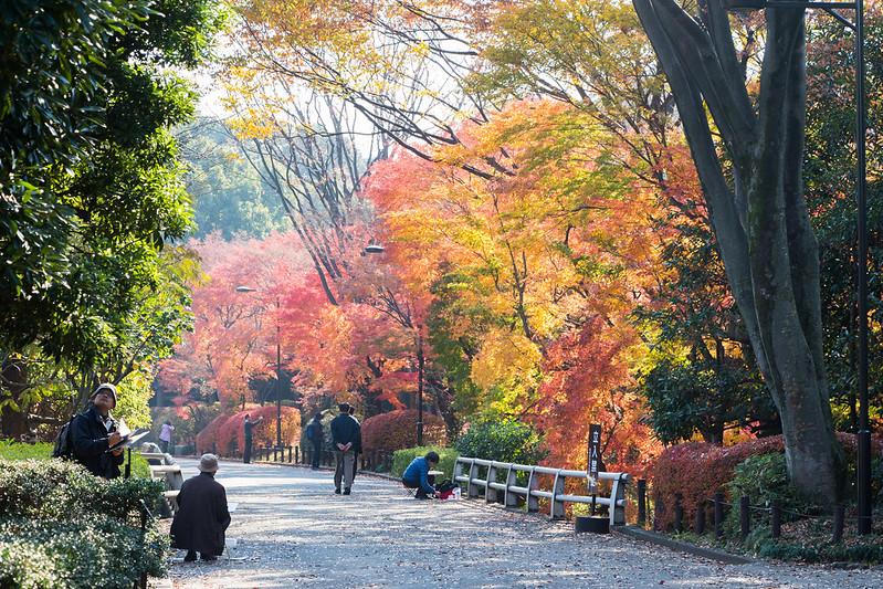 kitanomaru-park-1