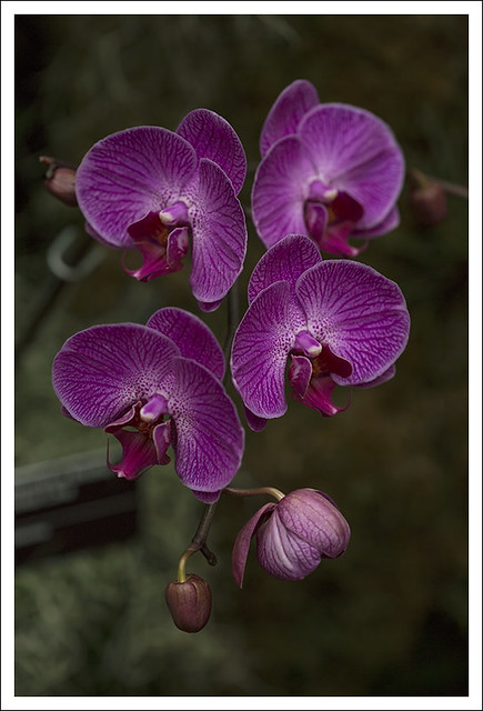 2014 Orchid Show 2