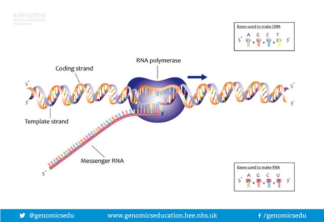 Process of transcription