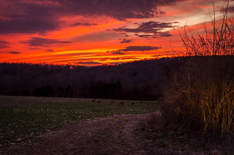 sunset-0315 eb