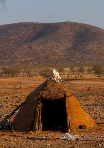 africa animal vertical outdoors photography day village fulllength goat nobody nopeople afrika shelter namibia kaokoveld himba epupa namibie damaraland colorimage cunene namibe ruacana colorpicture 0655 namibië namiibia kuneneregion colourimage ovahimba nomadicpeople colourpicture ναμίμπια ナミビア 나미비아 намибия namibya namibio นามิเบีย נמיביה 納米比亞纳米比亚 karihonavillage