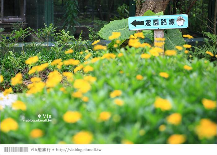 【新竹景點推薦】森林鳥花園~親子旅遊的好去處!在森林裡鳥兒與孩子們的樂園25