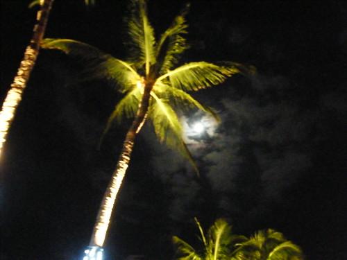2-palm&moon