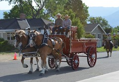 amish(1.0), vehicle(1.0), pack animal(1.0), coachman(1.0), horse harness(1.0), horse and buggy(1.0), land vehicle(1.0), carriage(1.0), cart(1.0),