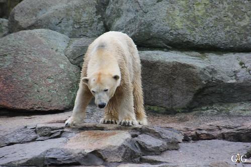 Sonntags Besuch im Zoo Berlin 25.01.2015 5