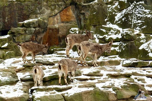 Zoo Berlin 06.02.2015  2