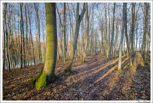 natur landschaft wald tamron1024mmf3545spdiiildaslif