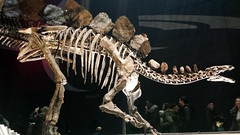 skeleton(1.0), dinosaur(1.0),