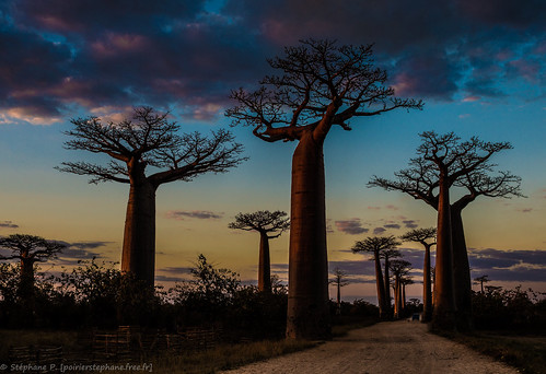 pentax madagascar baobab 2013 goldcollection pentaxart