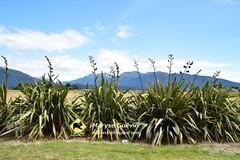 Te Anau Nouvelle-zélande