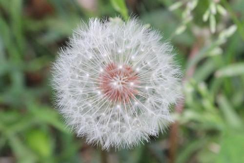 IMAGE: http://farm8.staticflickr.com/7417/8714878631_c036372f0d.jpg
