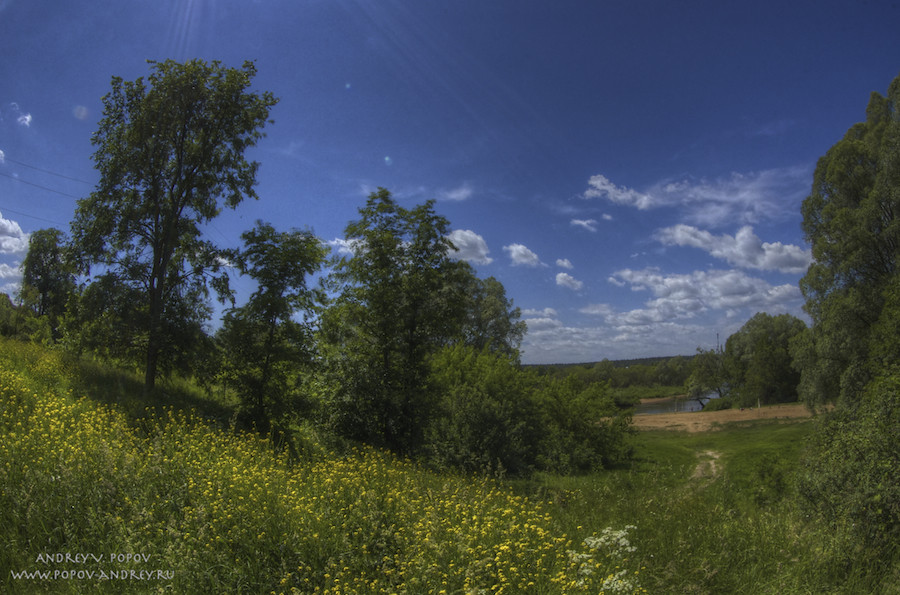 Summer pastoral #1