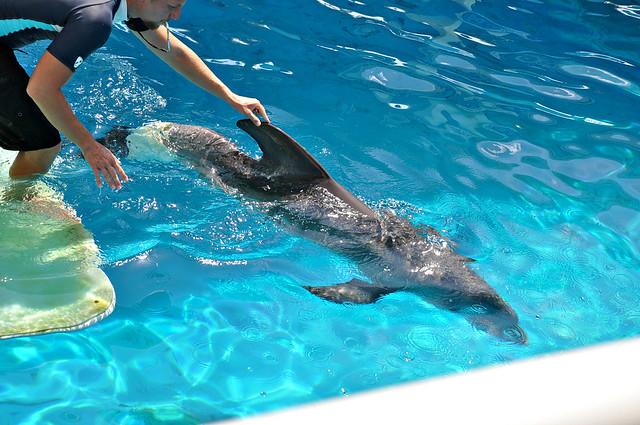 Clearwater Marine Aquarium Winter The Dolphin Flickr