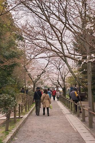 【写真】2013 桜 : 哲学の道/2018-12-24/IMGP9190