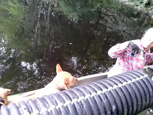 Movie: Ready to pipe beaver dam (8.4M)