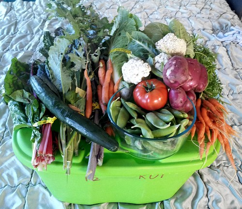 "This Week""s Roll Organic Farms CSA delivery by kevynjacobs"