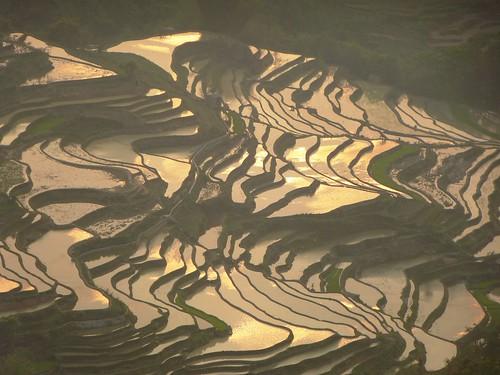 Yunnan13-Yuanyang 24-Bada (49)