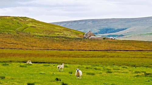 england painterly painting landscapes funny sheep lancashire moors pennines northernengland westpenninemoors applecrypt