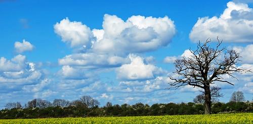 blue light sky cloud sun tree skyscape bedford scenic bedfordshire vista felton rapeseed lumen oilseedrape cardington robertfelton