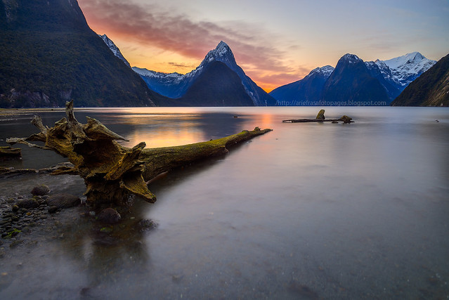 Logged Out | Milford Sound