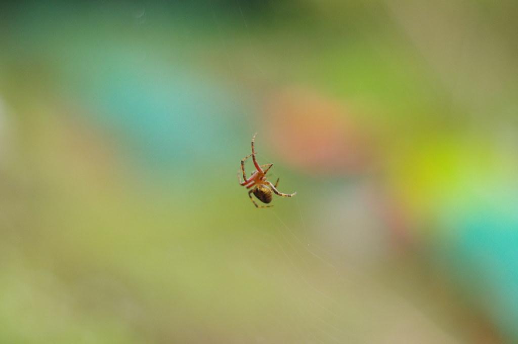 [一張流]請問他是甚麼蜘蛛?