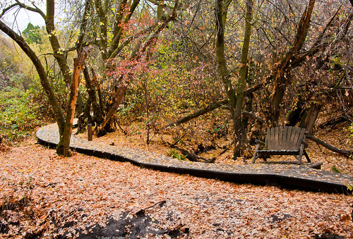 california autumn trees fall nature leaves landscape paths benches sanbernardinocounty oakglen wildlandsconservancy oakglennaturepreserve