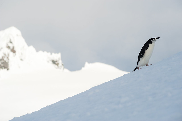 20131201_155614_Antarctica_D700_8761.jpg