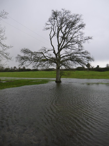 Thames Head - Normally Dry