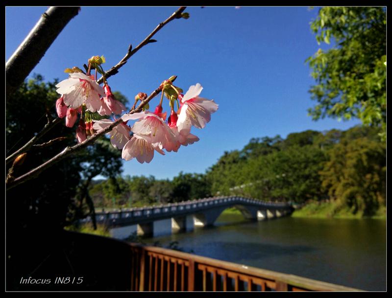 雜牌手機拍櫻花