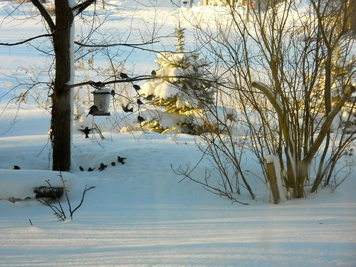 snow, birds , and sun