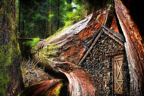 Mt Baker Tree House