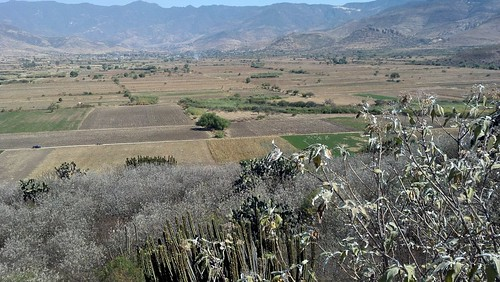 oaxacan fields 2