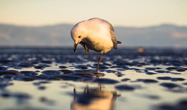 Птица стоит на одной ноге
