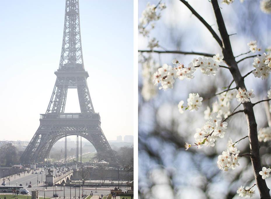 Cherry blossom in the Champ de Mars-7.jpg