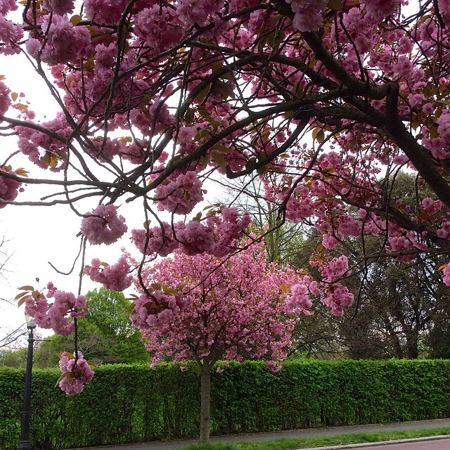 Regent's Park Spring 2014