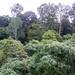 Small photo of Dipterocarp Rainforest at Sepilok